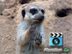 Digital staircase MovieCam for iPad gets the meercat approval